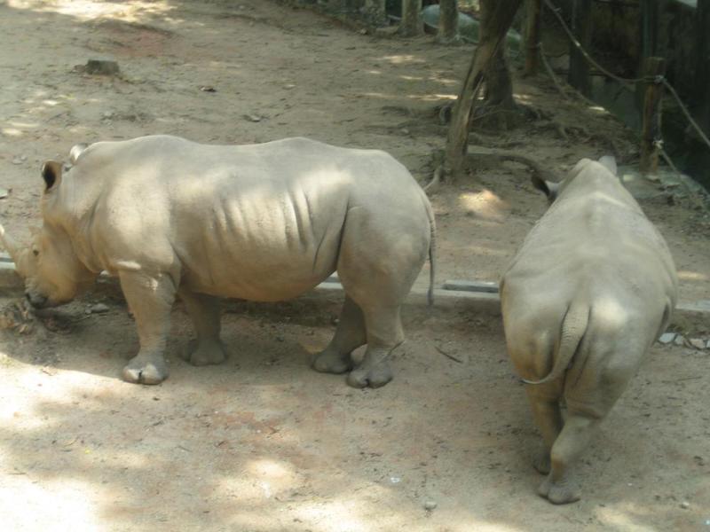 到深圳市野生动物园秋游